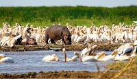 Discover East Africa with African Travel